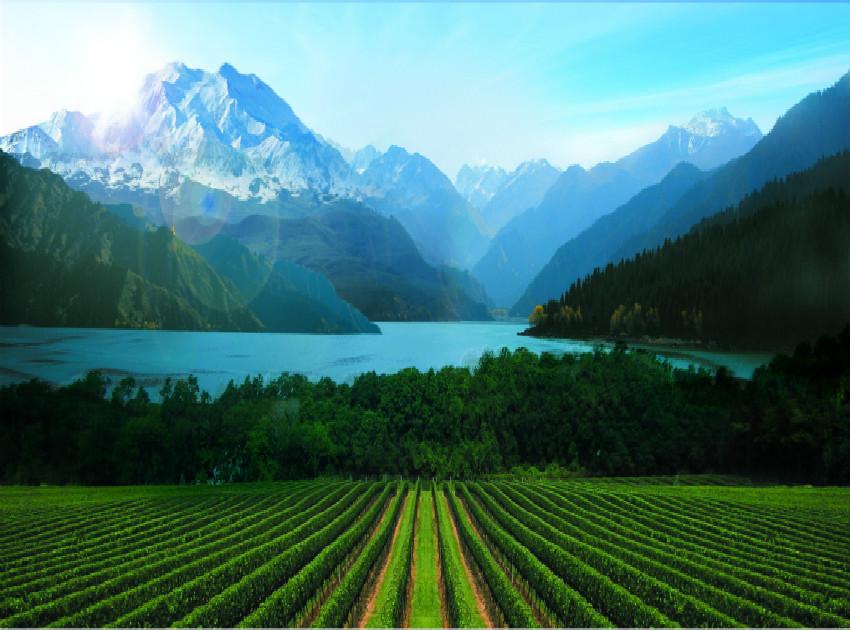 新疆怡然酒业