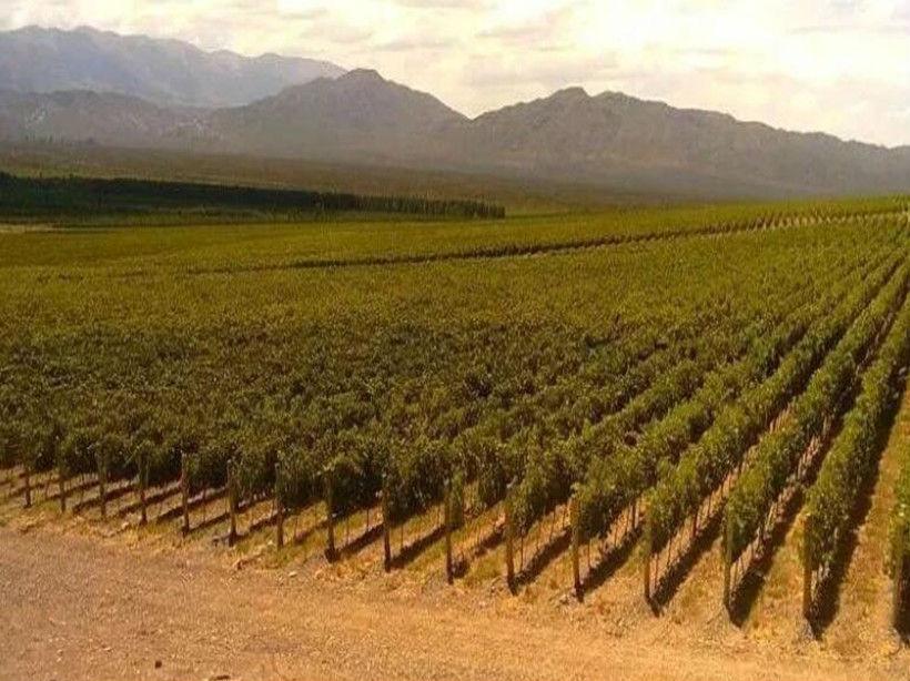 黑莓酒庄Las Moras