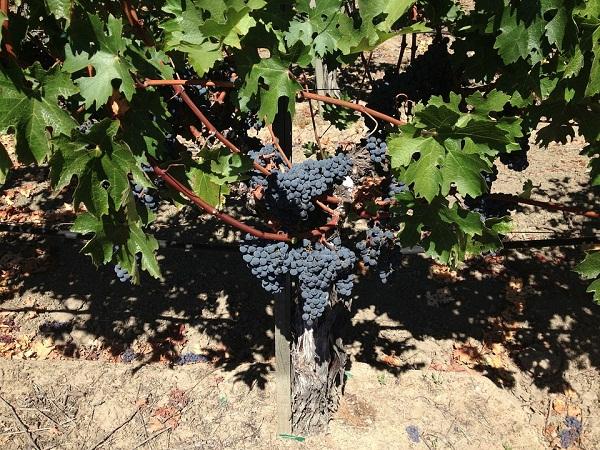 亚美尼亚葡萄酒产区