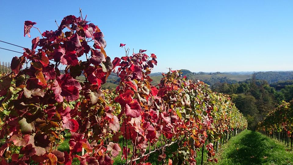 阿塞拜疆葡萄酒产区