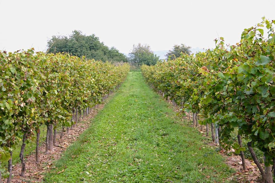 斯洛伐克葡萄酒产区