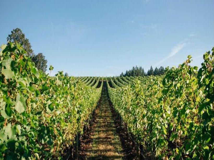 牛角酒庄Cowhorn Vineyard Garden