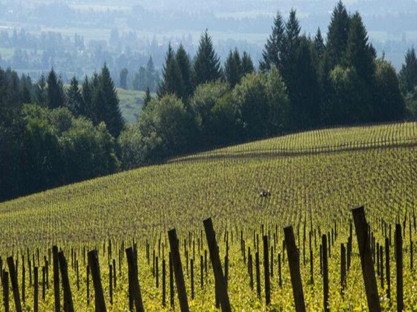 菱花酒庄Argyle Winery