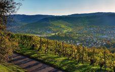 荷兰葡萄酒产区