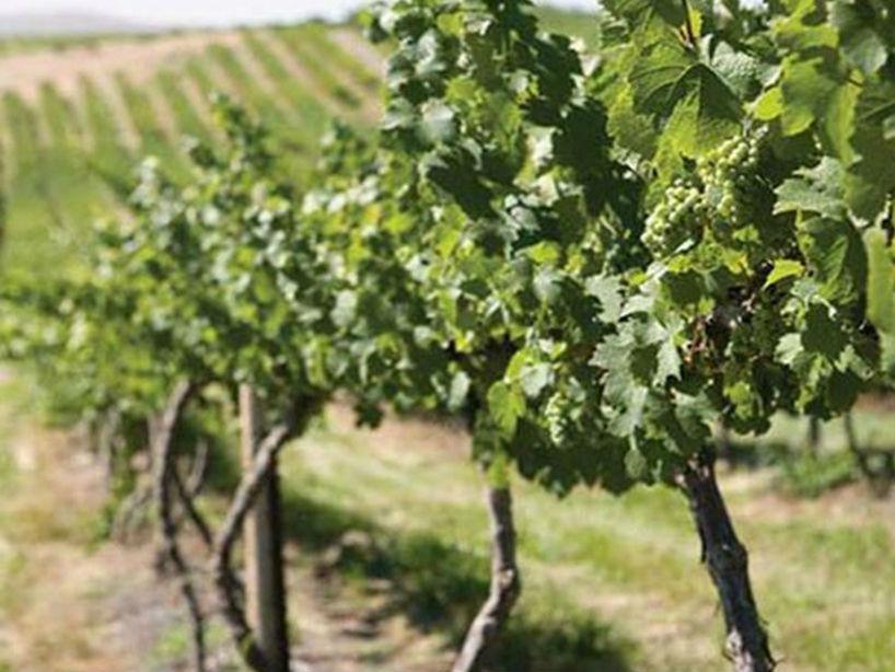 英雄酒庄Eroica Wine