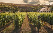 大西洋葡萄酒产区