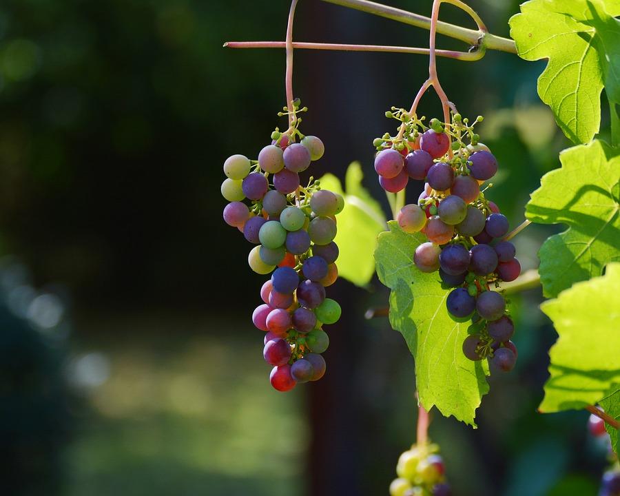 """奥地利""""多瑙流域""""葡酒产区寻求改名的缘由"""