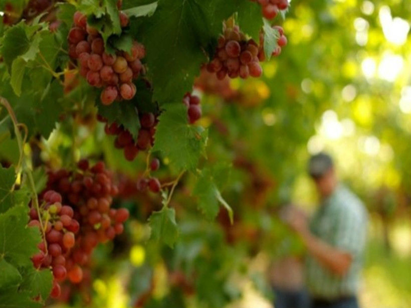 弗雷斯诺酒庄Fresno State Winery