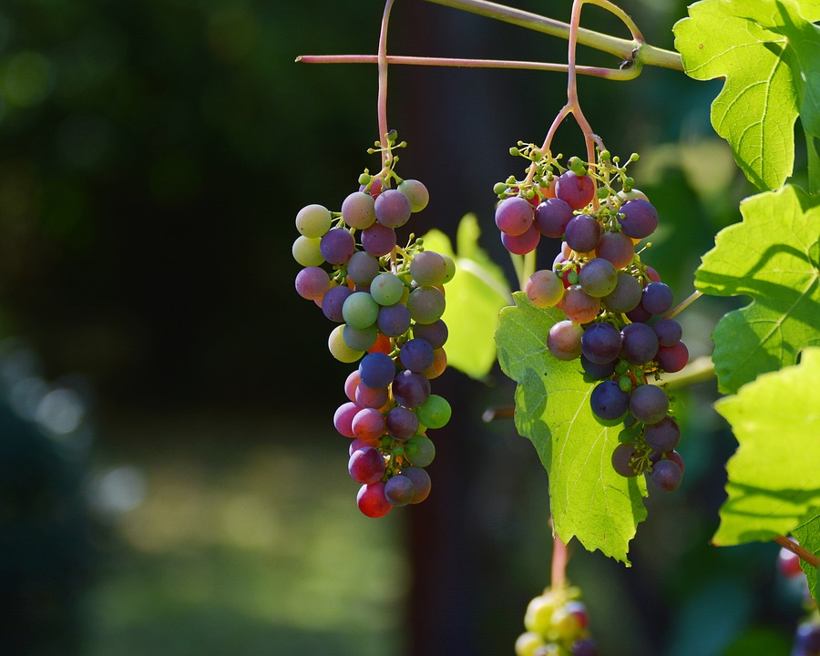 世界各地的梯田葡萄园你喜欢哪个?