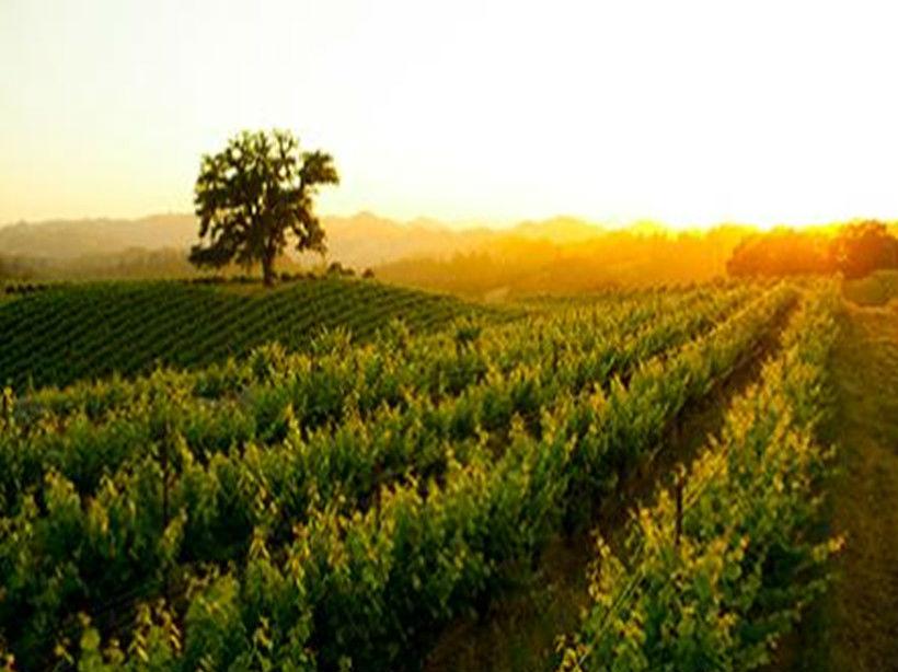 艾洛德酒庄Arrowood Winery